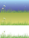 Field grass Stock Image