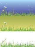 Field grass Stock Image