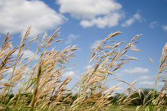 Field of Grass Royalty Free Stock Images