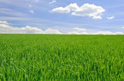 Field of grass. Field of green grass and wonderful sky Royalty Free Stock Photography