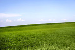 Field of grass. And perfect sky Stock Photography