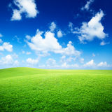 Field of grass. And perfect blue sky Stock Images