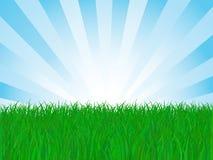 Field of Grass. Vector Illustration Stock Photos