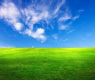 Field of grass. And blue sky Stock Photo
