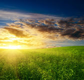 Field of grass Stock Images