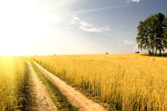 Field of grass on background distant wood Royalty Free Stock Photos