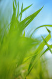 Field grass background Stock Photography
