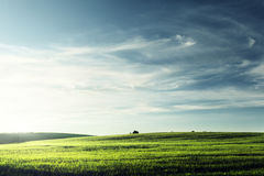 Field of grass Royalty Free Stock Photography