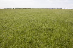 Field with a grass Stock Image