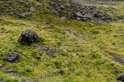 Field of grass and black rocks. Typical to the south island of New Zealand Stock Image