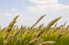 Field and grass close-up Royalty Free Stock Image