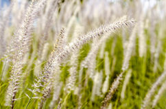 Field of grass is close up Stock Photos