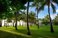 Field of grass and coconut palms on Mauritius Royalty Free Stock Photos