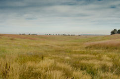Field of Grass in Colorado Stock Images