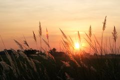 Field of grass during colorful sunset background. Field of grass during colorful sunset in countryside background Royalty Free Stock Photography