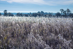Field of grass covered with frost Royalty Free Stock Photo