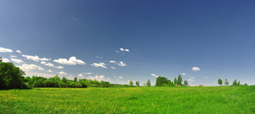 Field of grass with dandelion Royalty Free Stock Photo
