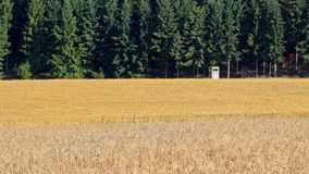 Field, Grass Family, Crop, Agriculture stock photography