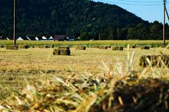 Field, Grass, Farm, Agriculture royalty free stock images