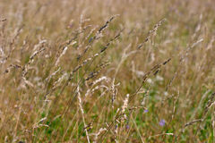 Field with grass Royalty Free Stock Photo