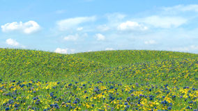 Field with grass and flowers on a background of blue sky Royalty Free Stock Photos