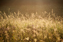Field of grass and flowers summer meadow nature background Stock Photo