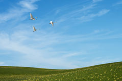 Field of grass and flying birds Stock Image