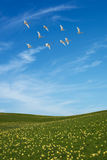 Field of grass and flying birds vertical image Stock Images