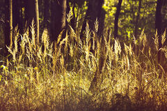 Field of grass and forest in background. Retro or vintage filter Stock Images