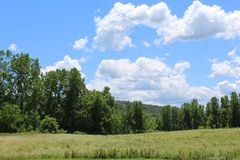 Field of grass, forest, hills and sky. Rural Ithaca New York in the summer. Bright blue sky with white clouds in the summer. Finger Lakes Region stock photos