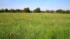 Field of Grass in Front of Forest stock footage