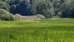 Field of Grass in Front of Forest stock video
