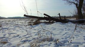 Field with grass frozen and away the Russia dead trees winter landscape steadicam outdoors snow. Field with grass frozen and away Russia dead trees winter stock video