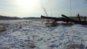 Field with grass frozen and away the Russia dead trees winter landscape steadicam snow outdoors. Field with grass frozen and away Russia dead trees winter stock video footage