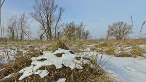 Field with grass frozen and snow away Russia dead trees winter outdoors landscape steadicam. Field with grass frozen and snow away the Russia dead trees winter stock video
