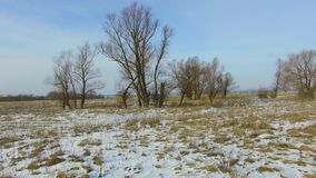 Field with grass frozen and snow away Russia outdoors dead trees the winter landscape steadicam. Field with grass frozen and snow away Russia outdoors dead trees stock footage