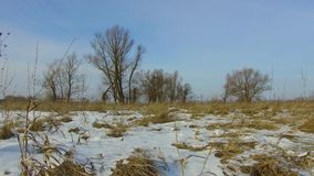 Field with grass frozen and snow away the Russia outdoors dead trees winter landscape steadicam. Field with grass frozen and snow away Russia outdoors dead trees stock footage