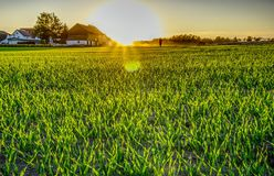 Field, Grass, Grassland, Crop royalty free stock photo