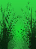 Field grass on a green background isolated Royalty Free Stock Image