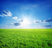 Field of grass. Field of green grass and perfect sky and trees Royalty Free Stock Images