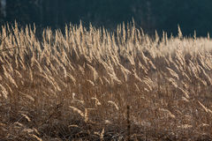 The field grass Royalty Free Stock Photos