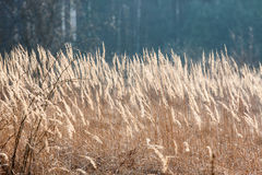 The field grass Royalty Free Stock Images