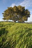 Field with grass, hils, large tree and sky Royalty Free Stock Photography