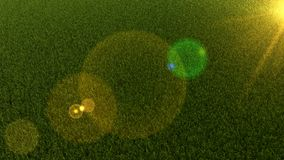 Field of grass with lens flare. 3d render. Graphic illustration. Background. Graphic composition with grass and lens flare Stock Photos