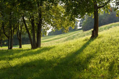 Field of Grass with Low Sun. Shade and Low Light with Field and Trees Stock Photos