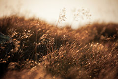 Field grass Stock Photography