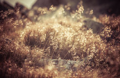 Field grass Royalty Free Stock Photos