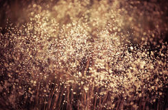 Field grass stock images