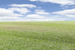 Field grass in the morning with blue sky background. Royalty Free Stock Photos
