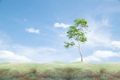 Field grass in the morning,and green tree with blue sky. Stock Photos